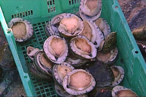 Most Expensive Abalone